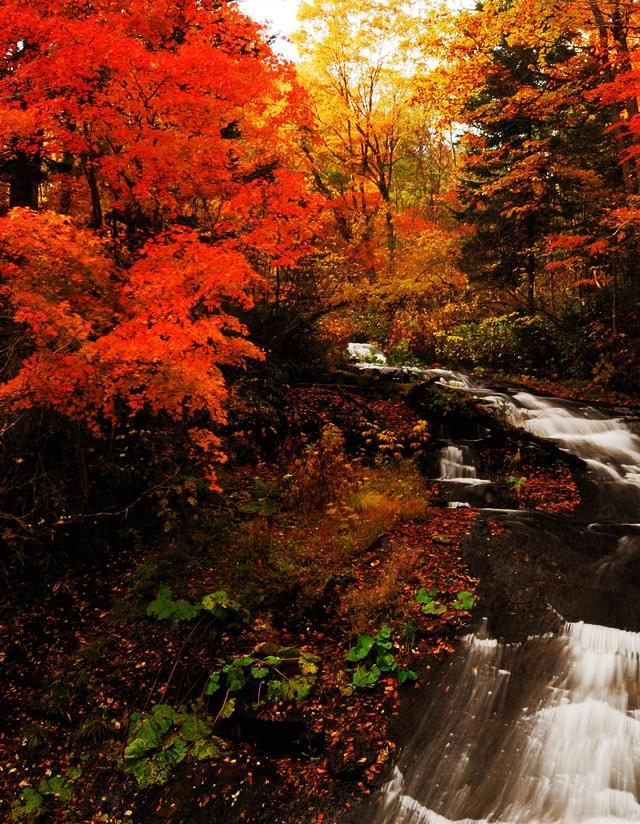恵庭 季節のイメージ 秋