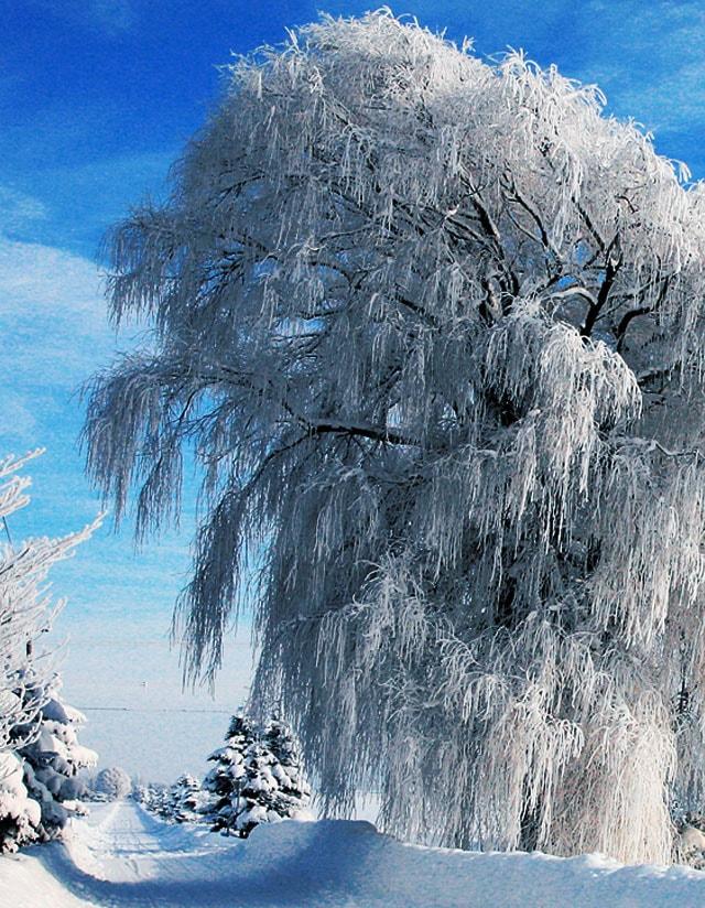 恵庭 季節のイメージ 冬