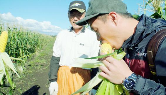 吉田農場/收穫體驗(蘆筍)の写真