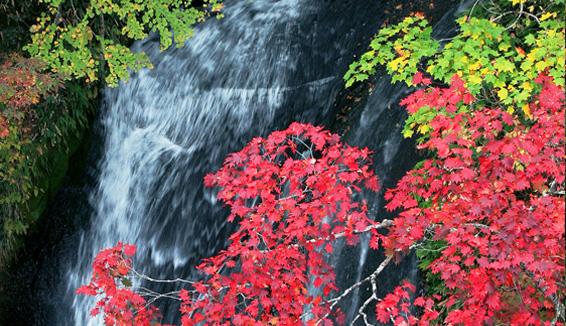 白扇の滝・ラルマナイの滝・三段の滝/紅葉観賞の写真
