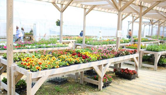 Sun Garden/賞花の写真