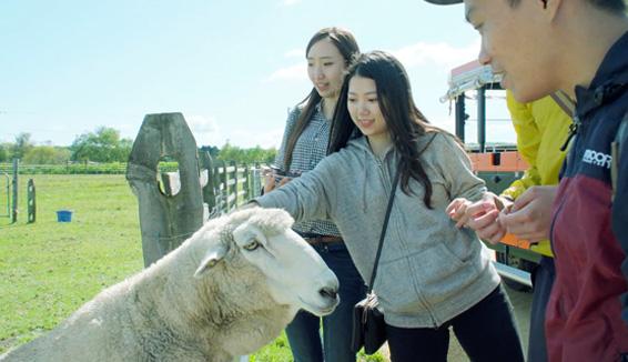 えこりん村/みどりの牧場体験の写真