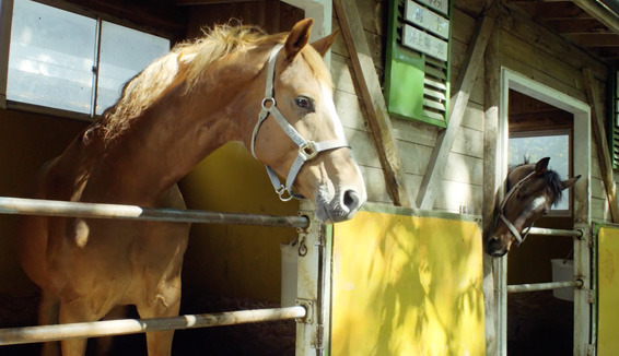 鈴蘭騎馬俱樂部/騎馬體驗の写真