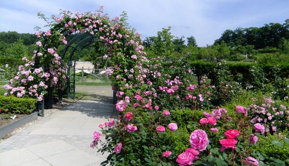 ECORIN村/銀河庭園の写真