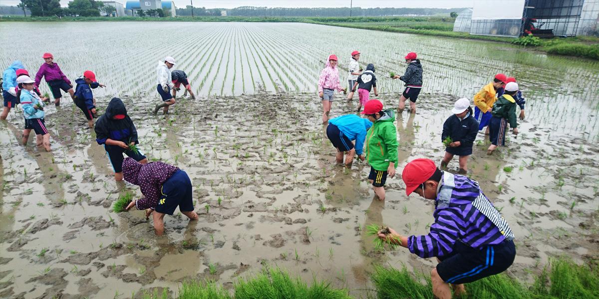 Shimada Farm main image