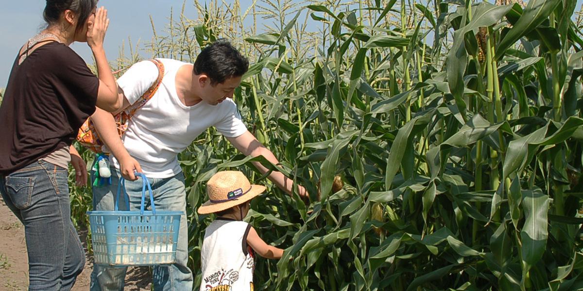 吉田農場のメイン写真