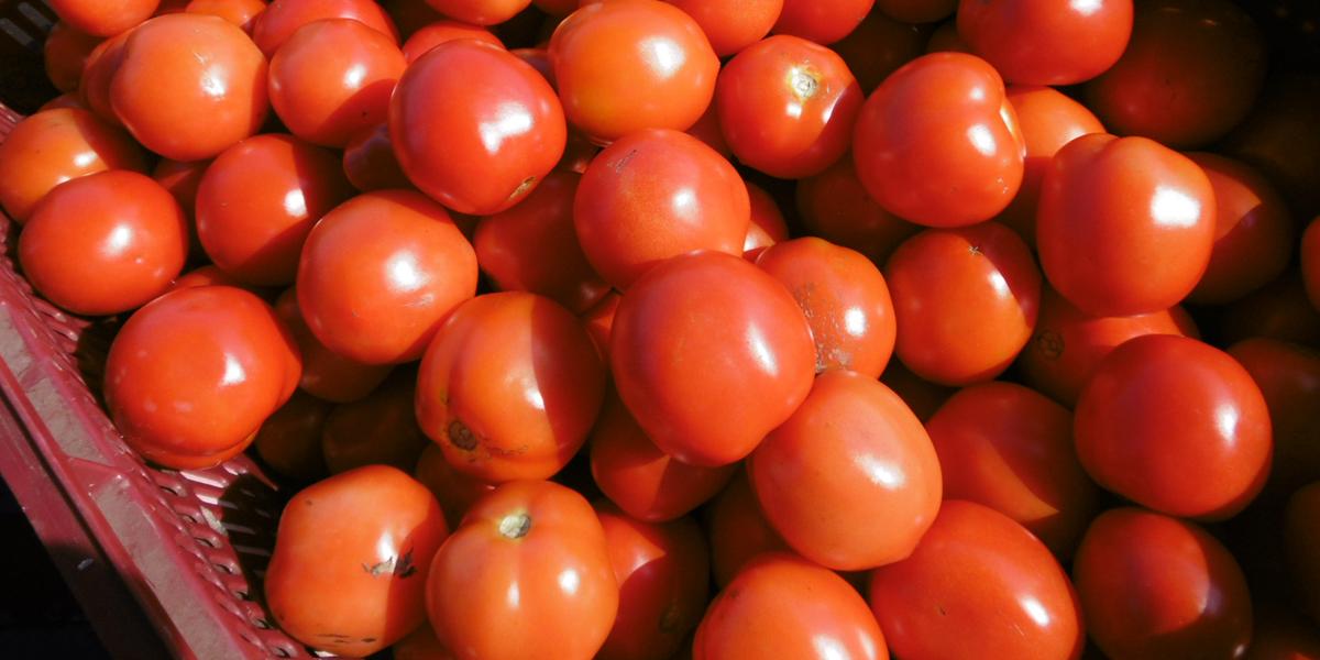 Yogo Nouen (Making Tomato Sauce) main image