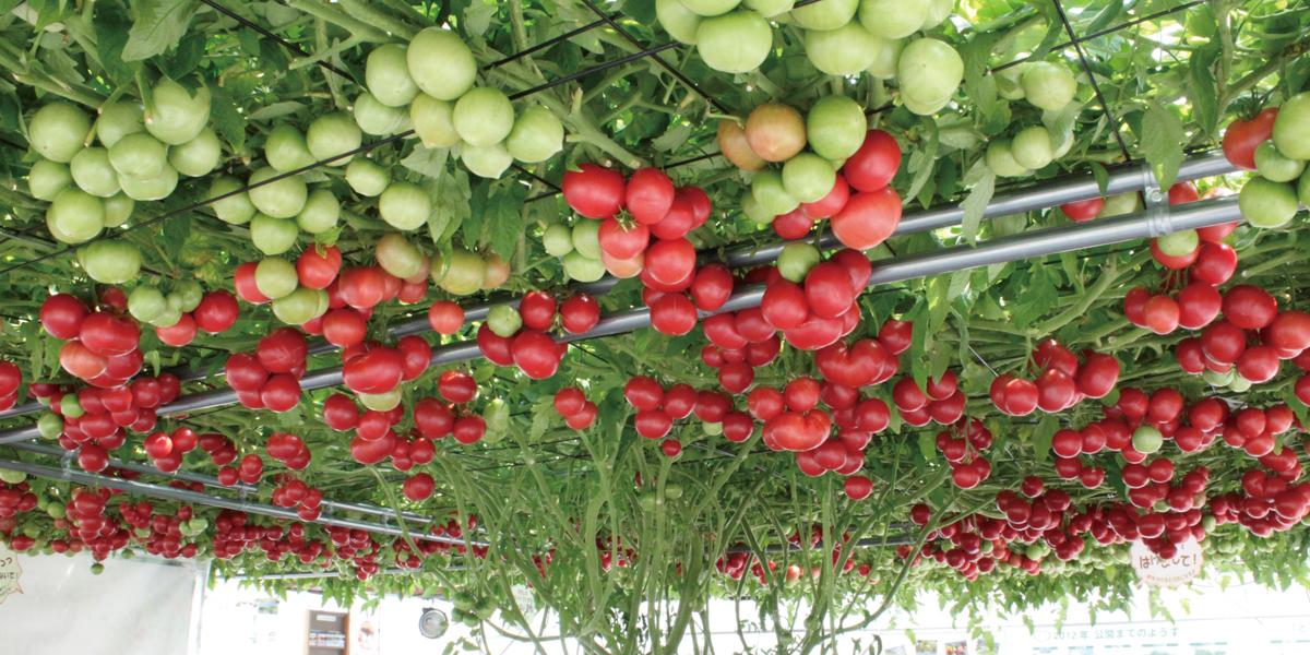 番茄森林咖啡店(Ecorin Village)のメイン写真
