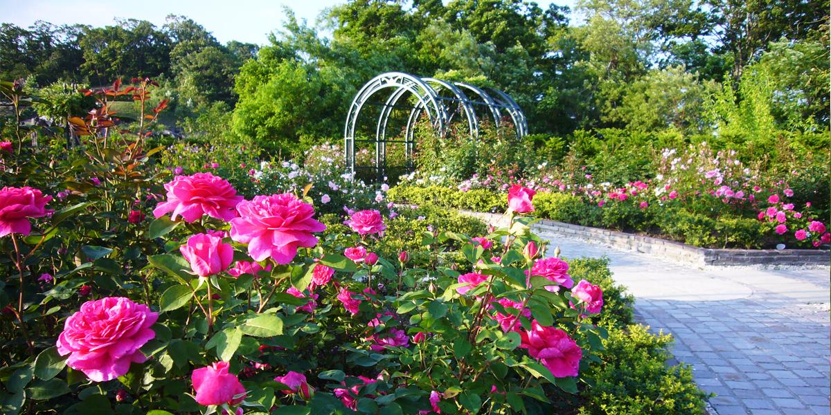 Rose Weeks(バラ祭り)のメイン写真