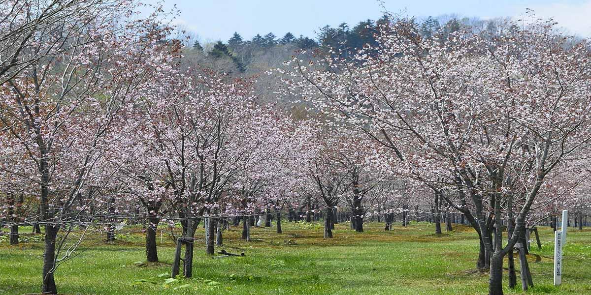 桜公園・自由広場のメイン写真