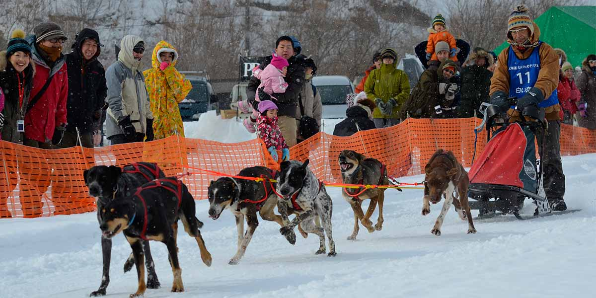 The 7th Eniwa Sled Dog Race main image